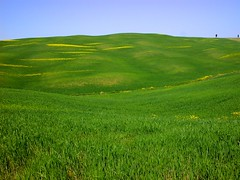 Toscana - tra S.Quirico d