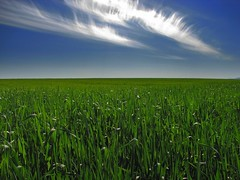 simply green and blue - nature landscape sky blue green hungary magyarország field cloud countryside spring wheat