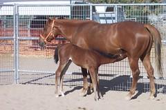 Baby b nursing (maryLohio) Tags: 426 mhr