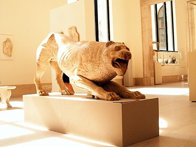Roman cat