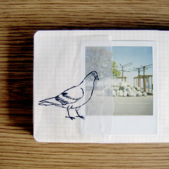 (medejavecu) Tags: road wood blue trees brown lake bird film moleskine collage analog paper polaroid grey book see sketch klein drawing pigeon dove diary sketchbook 600 waste transparent taube venedig konstanz mll pola carbage