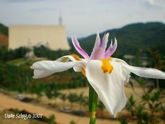 (elainne) Tags: santa flower macro nova dof flor nd trento madre fé paulina