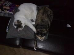 07052007028.jpg (judey) Tags: cat twinkle pixel