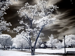once more, with feeling (zachstern) Tags: trees wallpaper tree landscape ir arbol tr boom rbol infrared   albero tre puu arbre rvore strom baum trd  infravermelho    r72 copac infrarot   drzewo   stablo infrarrojos   infrapuna infrarood infrarouge  infrarossi   f717ir  inframerah      infravrs  infraerven