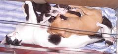 happy mothers day (sosgatinhos) Tags: love cat furry feline mother gato felino shelter mãe adoption adoção peludo adote abrigo animalwelfare catlover sosgatinhos
