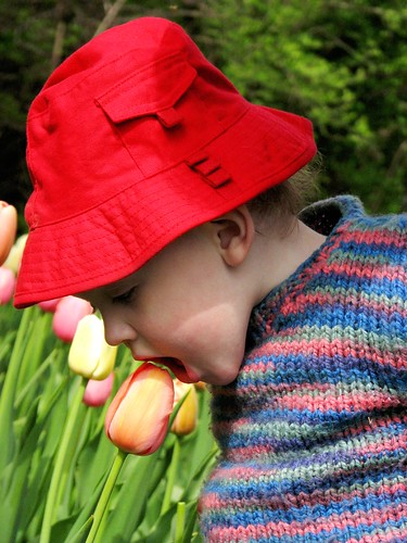 tasting the tulips