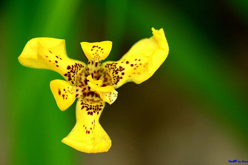 Flower @ Hua Hin