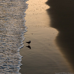 Chase (Jack Hindmarsh) Tags: ocean shadow bird eye beach silhouette sand bravo surf seagull gull wave trophy avilabeach supershot magicdonkey outstandingshots specnature spectacularnature tepasaste flickrgold anawesomeshot goldenphotographer ithinkthisisart theothervillage flickrelite mrdain