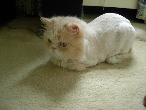 What Kind of a Person Shaves a Cat?