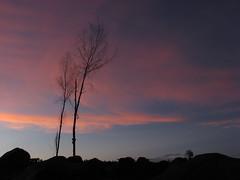 Agoho trees (mayon2000) Tags: sunset mayon albay bikol