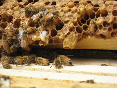 Beekeeping 2250