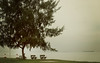 going unnoticed (meeralee) Tags: trees sea beach singapore view horizon benches tinted endless softly myeverydaylife home2007
