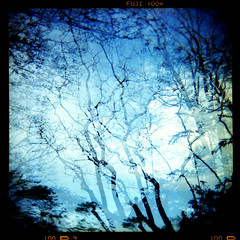 fading light (Stitch) Tags: trees 120 film leaves forest mediumformat holga lomo branch fuji superia doubleexposure philippines weeklysurvivor vignettes weeklyblog33