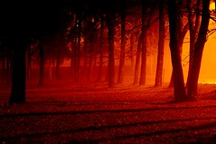 Foggy Night Continued.....