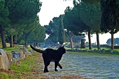 Ancient roman cat (ingirogiro) Tags: italy cats black rome roma green animal 5d sampietrini appia minola ontheroadromamor