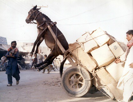 Photo of a donkey with a very heavy load
