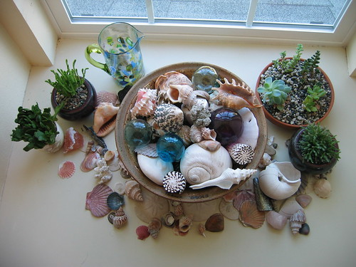 Succulent and Seashell garden