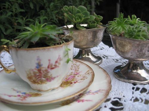 plants in vintage containers