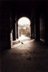 Cats & Colisseum (Zeb Andrews) Tags: bw italy cats rome film beautiful sepia 1025fav 510fav 35mm wonderful europe roman 100v10f historic rodinal ilfordxp2 nikonfm2 111v1f interestingness33 i500 bluemooncamera explore8march2006 zebandrews thecatwhoturnedonandoff zebandrewsphotography