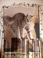 Aliche (odei) Tags: cat books gato libros gatto