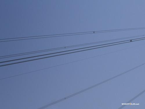 Flickriver Photoset Electric Wallpaper By Allispossibleorguk