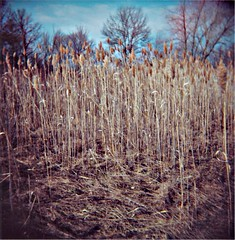 Edge of Drive In (J.T.R.) Tags: camera nature sepia toy holga surreal fonthill holga120s palabra thorold canviewdrivein