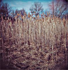 Edge of Drive In (J.T.R.) Tags: camera nature sepia toy holga surreal fonthill holga120s palabra thorold canviewdrivein
