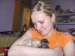 Kitipildid (14) (Siki:)) Tags: cat kitten kass kiisud punane