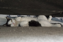 Harry (S.D.) Tags: cat nikon d70s harry 2006 nikond70s vr dx 18200mm may2006