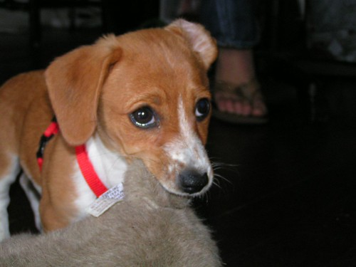 penny puppy 4