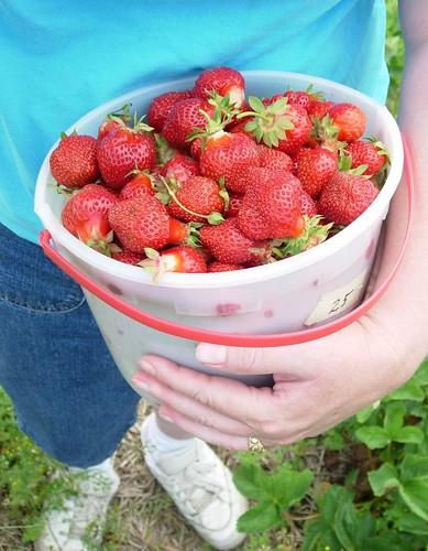 Picking Strawberries Again
