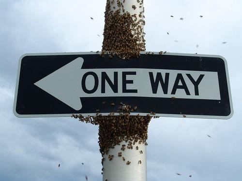 swarm1