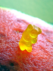 Lemon Gummi Watermelon Macro (The name of my new band too) (libraryman) Tags: bear red macro green yellow lemon candy watermelon melon gummy gummybear sweetcandy