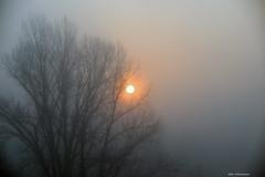 La nebbia di un mattino di Dicembre (Paolo Bonassin) Tags: sunrise fog nebbia italy emiliaromagna zolapredosa
