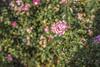 IMG_0597 (digitalarch) Tags: 네덜란드 헤이그 netherlands hague 덴하그 denhaag 로사리움 rosarium 장미정원 장미 rose