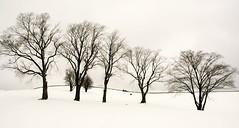 First Run (pmorgan) Tags: snow canada halifax citadelhill toboganing wernerbischof utatapayshomage utatamasterbischof