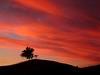 sunset tree (EssjayNZ) Tags: sunset newzealand tree tag3 taggedout rural countryside tag2 tag1 2006 100v10f fv5 interestingness57 essjaynz putaruru 111v1f 50v5f taken2006 i500 fcsetsrises sarahmacmillan
