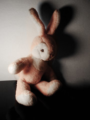 follow the pink rabbit (cippacate) Tags: pink rabbit rosa peluches coniglio preferito
