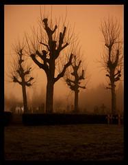 cemetrees (kiplingflu) Tags: friedhof cemetery 510fav interesting war cementerio favme graves 1on1 cimetière cimiteri