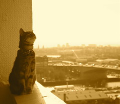 Soba looking at the Sky... (LiseMac) Tags: city sky sun topv111 sepia cat freshair happy scotland 500v20f glasgow balcony windy most 2550fav 500v50f soba halloffame citycentre 11thfloor davaar lifeisart sukihiding 30faves30comments300views