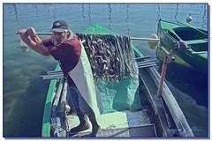 Poisson d'Avril :-) (Turquoise Bleue) Tags: fish france turquoise country mimbrava poissons pêcheurs aprilfoolsday poissondavril ilovemycountry turquoisebleue abigfave impressedbeauty flickrius liveinfrance