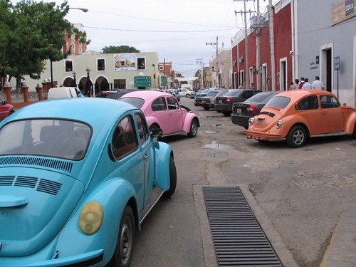 Colourful beetles