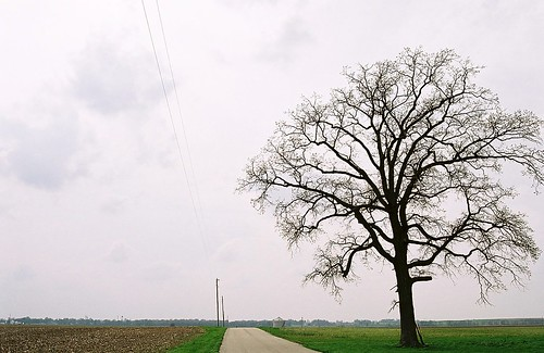 Rural Indiana tree