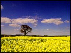 April (Mark Twells) Tags: tree yellow shropshire seed rape oil april eyton haughmond specnature abigfave anawesomeshot