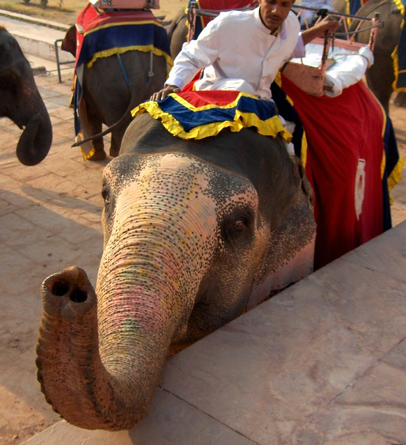 Elephant ride, Amber Fort