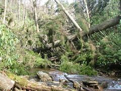 Downed Trees 2