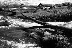 Rio Piracicaba (fabio teixeira) Tags: brazil brasil canon rebel xt fabio sp fotosafari canonrebelxt piracicaba teixeira fisp fotosafaripiracicaba fabioteixeira