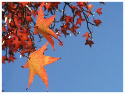 Herbst in Mendoza