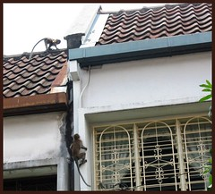 Jungle monkeys on buildings!