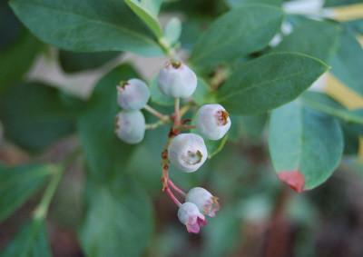 20070429 garden 04
